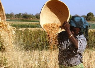 Wheat Development Programme Yield Underscores the Role of Research and Trials